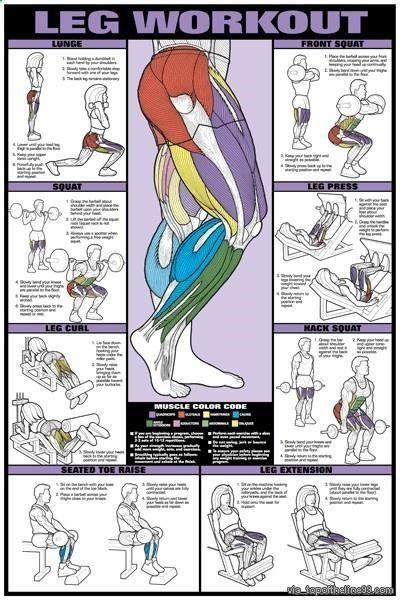 Exercice Du Sport : Les jambes: le groupe musculaire le