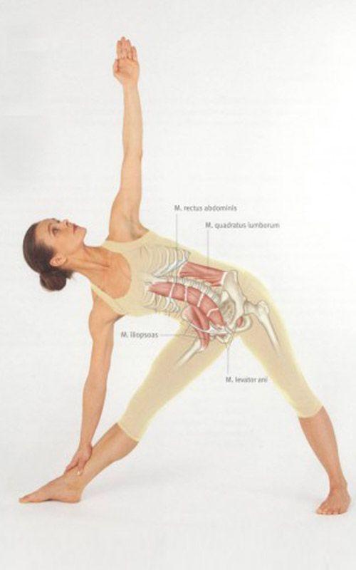 Exercice Du Yoga   Parivrtta Trikonasana   Pose du triangle en révolution – Comment  faire et quels sont ses ... 332f5063a03