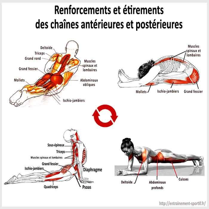 Renforcements et étirements des muscles du dos et du ...